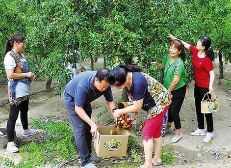 大荔新茂天地原生态养殖家庭农场